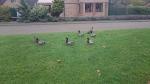 z3c ducks