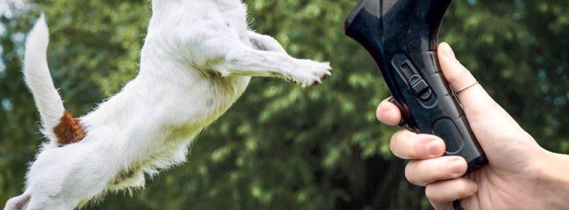 Pet Snack Launcher Review