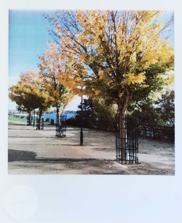 Polaroid Pop - Print